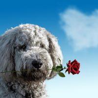 valentines-day-3135789__480