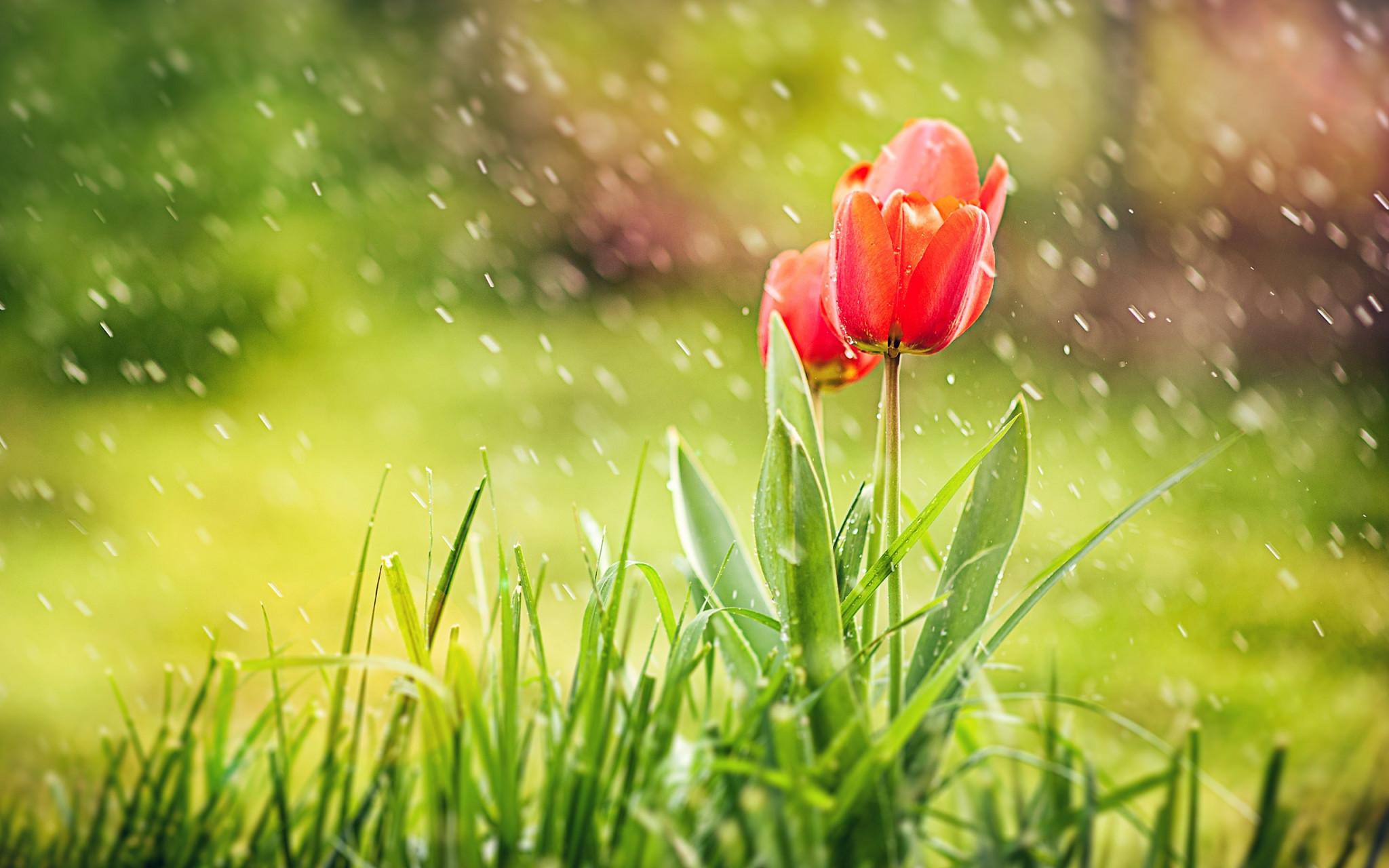 1180507 Free April Showers Wallpaper 2560x1600 Full Hd Umd Weather